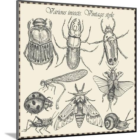 Vector Set Insects in Vintage Style- HorG-Mounted Art Print