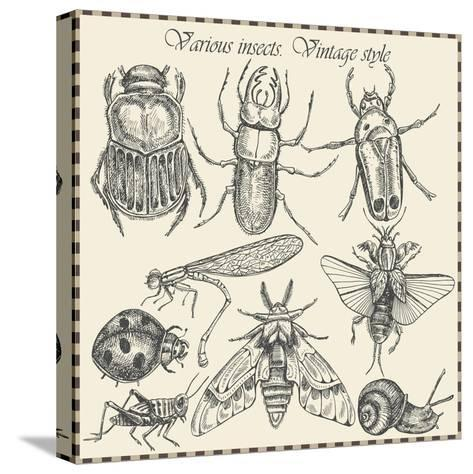 Vector Set Insects in Vintage Style- HorG-Stretched Canvas Print