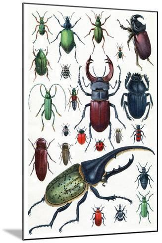 Insects, Beetles and Scarab, Vintage Engraved Illustration. La Vie Dans La Nature, 1890.-Morphart Creation-Mounted Art Print