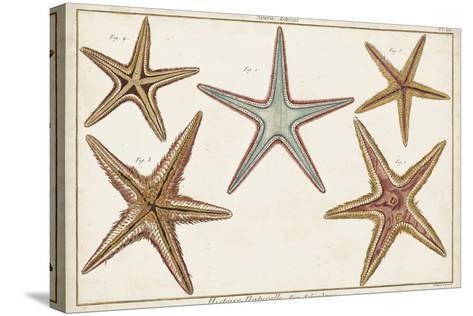 Starfish Naturelle I-Denis Diderot-Stretched Canvas Print