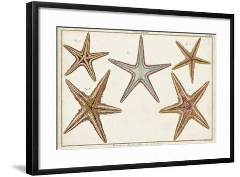 Starfish Naturelle I-Denis Diderot-Framed Art Print