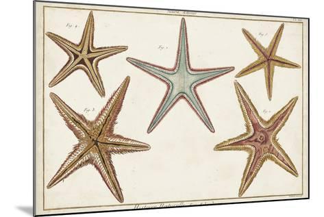 Starfish Naturelle I-Denis Diderot-Mounted Art Print