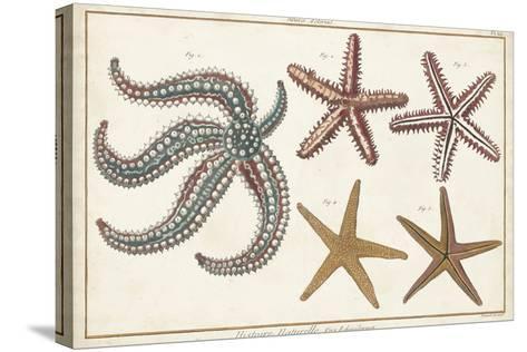 Starfish Naturelle II-Denis Diderot-Stretched Canvas Print