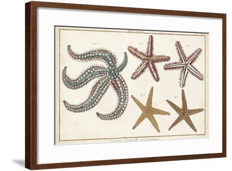 Starfish Naturelle II-Denis Diderot-Framed Art Print