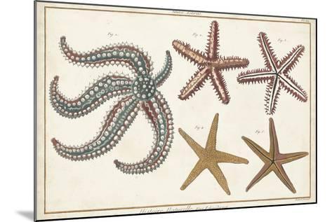 Starfish Naturelle II-Denis Diderot-Mounted Art Print