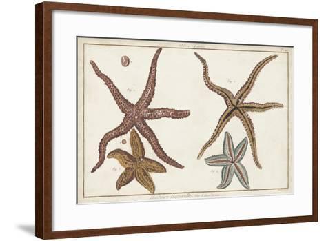 Starfish Naturelle III-Denis Diderot-Framed Art Print