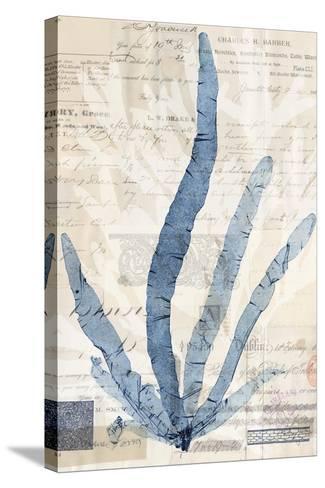 Seaweed Arrangement II-Vision Studio-Stretched Canvas Print