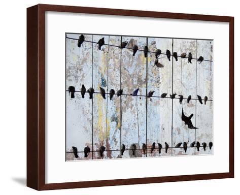 Birds on Wood IV-Irena Orlov-Framed Art Print
