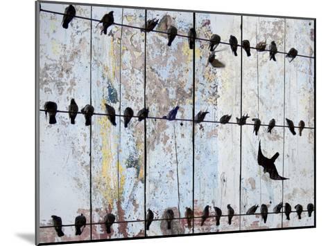 Birds on Wood IV-Irena Orlov-Mounted Art Print