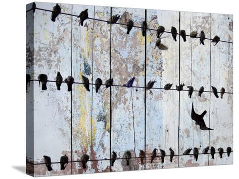 Birds on Wood IV-Irena Orlov-Stretched Canvas Print