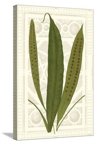 Garden Ferns VI-Vision Studio-Stretched Canvas Print