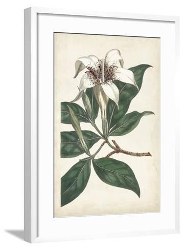 Ivory Garden I-Curtis-Framed Art Print