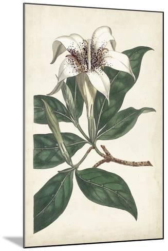 Ivory Garden I-Curtis-Mounted Art Print
