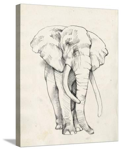 Elephant Portrait II-Jennifer Goldberger-Stretched Canvas Print