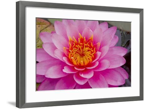 Lily closeup-Charles Bowman-Framed Art Print