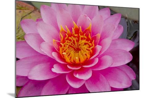 Lily closeup-Charles Bowman-Mounted Photographic Print