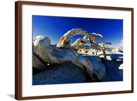 Fallen Pine Tree on Sentinel Dome-George Oze-Framed Art Print