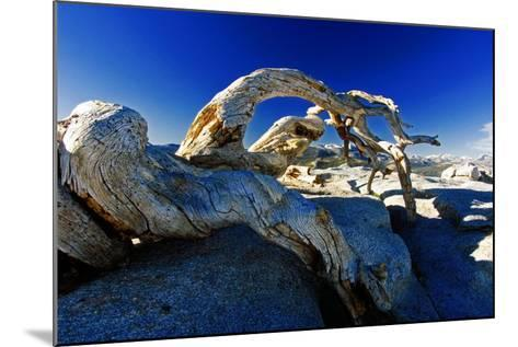 Fallen Pine Tree on Sentinel Dome-George Oze-Mounted Photographic Print