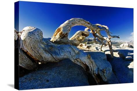 Fallen Pine Tree on Sentinel Dome-George Oze-Stretched Canvas Print