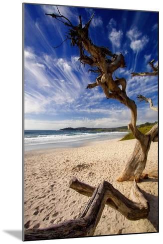 Tree on Carmel Beach, California-George Oze-Mounted Photographic Print