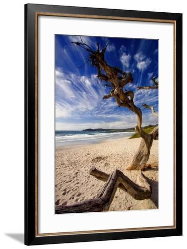 Tree on Carmel Beach, California-George Oze-Framed Art Print