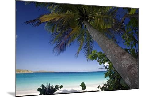 Trunk Bay Palm Tree, St John, US Virgin Islands-George Oze-Mounted Photographic Print