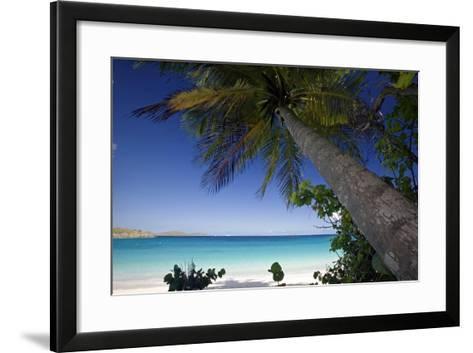 Trunk Bay Palm Tree, St John, US Virgin Islands-George Oze-Framed Art Print