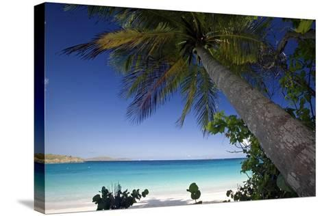 Trunk Bay Palm Tree, St John, US Virgin Islands-George Oze-Stretched Canvas Print