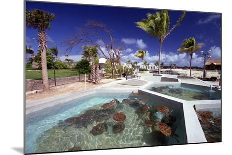 Turtle Yearlings In Pool Cayman Turtle Farm-George Oze-Mounted Photographic Print