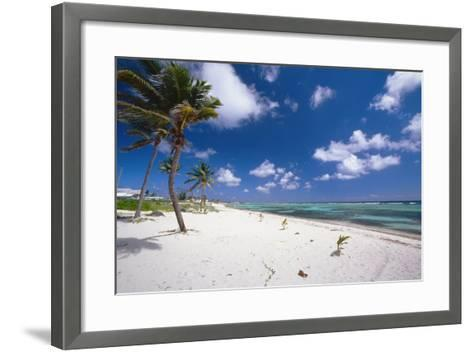 Palm Trees in the Breeze Cayman Islands-George Oze-Framed Art Print