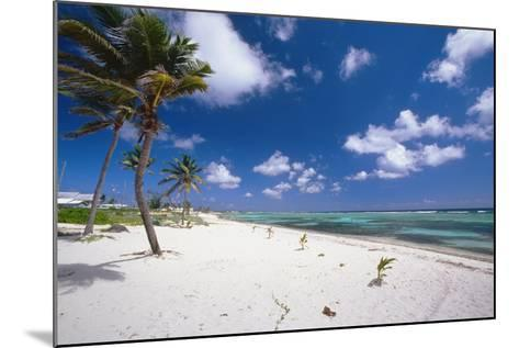 Palm Trees in the Breeze Cayman Islands-George Oze-Mounted Photographic Print