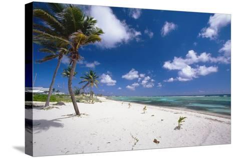 Palm Trees in the Breeze Cayman Islands-George Oze-Stretched Canvas Print
