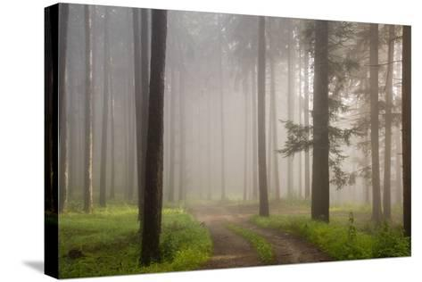 Misty forest in Wachau region of Austria-Charles Bowman-Stretched Canvas Print