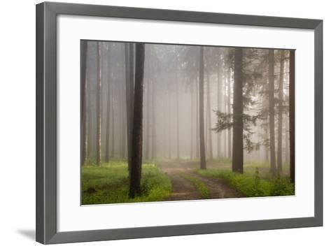 Misty forest in Wachau region of Austria-Charles Bowman-Framed Art Print