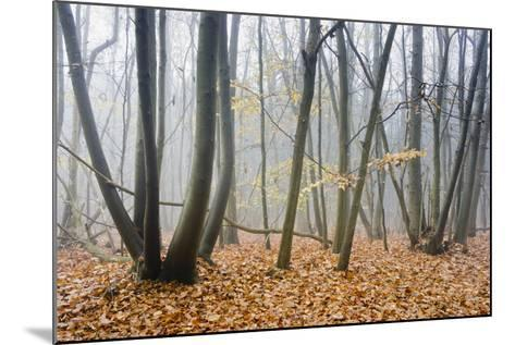 Forest autumn-Charles Bowman-Mounted Photographic Print