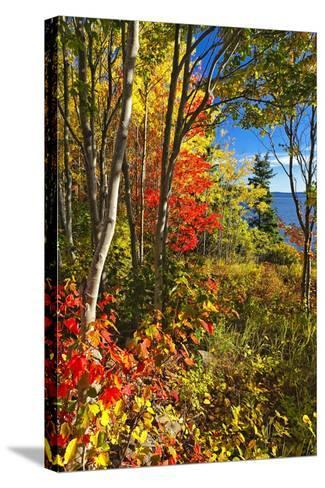 Coastal Forest Autumn Scenic, Maine-George Oze-Stretched Canvas Print