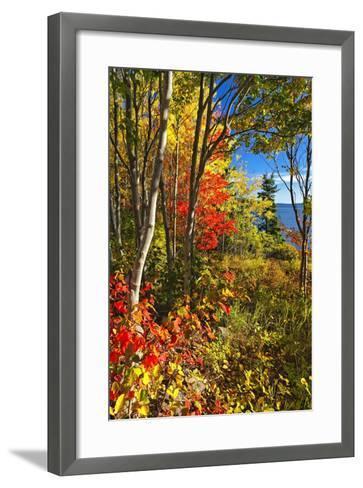 Coastal Forest Autumn Scenic, Maine-George Oze-Framed Art Print