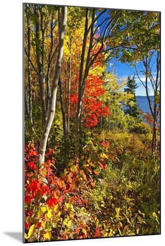 Coastal Forest Autumn Scenic, Maine-George Oze-Mounted Photographic Print