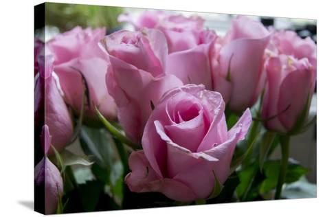 Roses Pink-Charles Bowman-Stretched Canvas Print