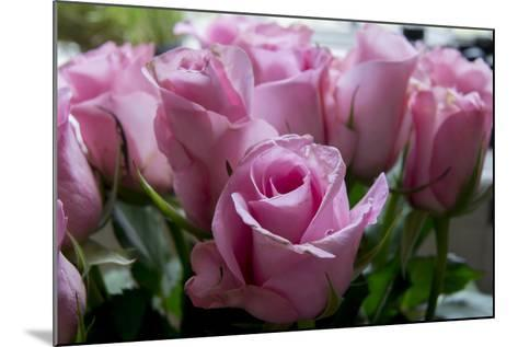 Roses Pink-Charles Bowman-Mounted Photographic Print