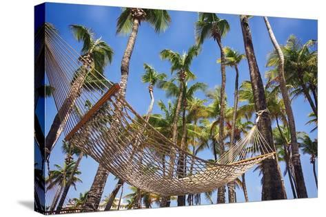 Hammock in a Palm Grove, Puerto Rico-George Oze-Stretched Canvas Print