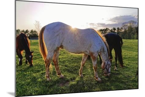 Horses Grazing in a Field, Tewksbury, New Jersey-George Oze-Mounted Photographic Print