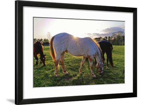 Horses Grazing in a Field, Tewksbury, New Jersey-George Oze-Framed Art Print