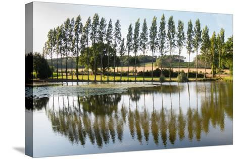 Line Of Trees Reflected-Charles Bowman-Stretched Canvas Print