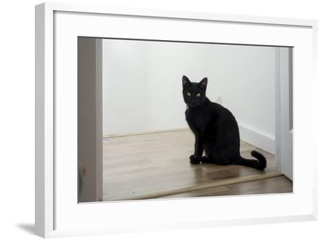 Kitten Black 1-Charles Bowman-Framed Art Print