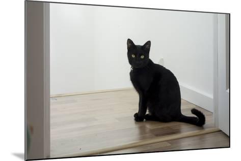 Kitten Black 1-Charles Bowman-Mounted Photographic Print