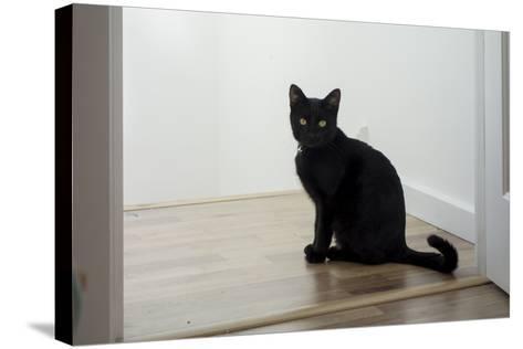 Kitten Black 1-Charles Bowman-Stretched Canvas Print