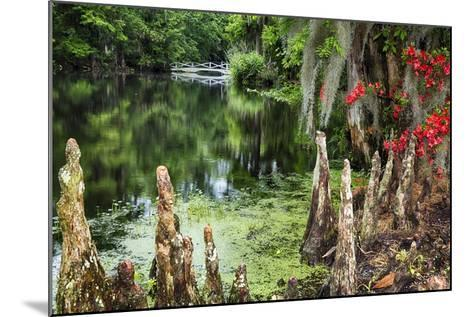 Swamp Cypress With Spanish Moss And Azalea-George Oze-Mounted Photographic Print