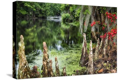 Swamp Cypress With Spanish Moss And Azalea-George Oze-Stretched Canvas Print