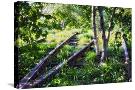 Birch Trees Of High Line Park, New York City-George Oze-Stretched Canvas Print